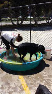 Doggin' Around Day Care, Ventura CA, Dog Day Care