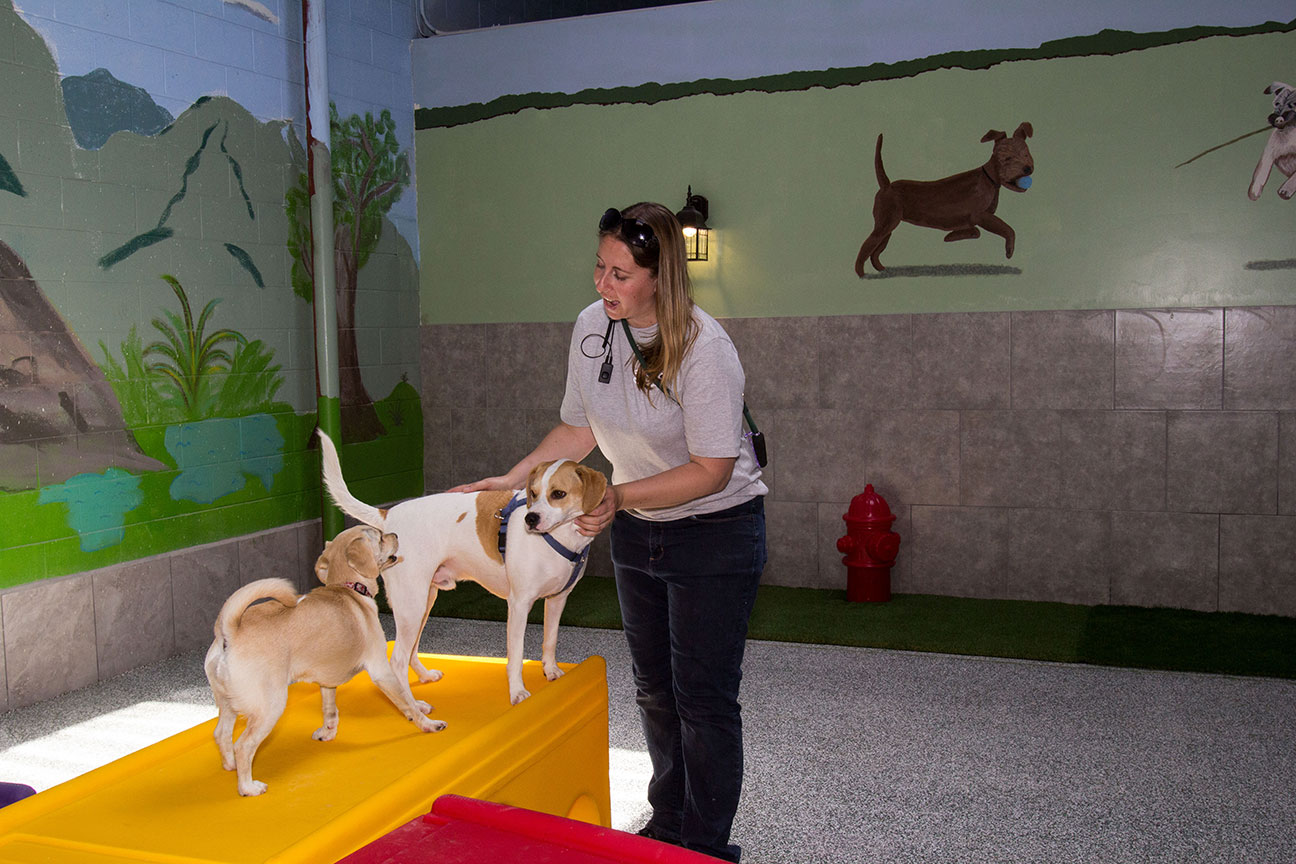 Doggin' Around Day Care, Ventura CA, Dog Day Care