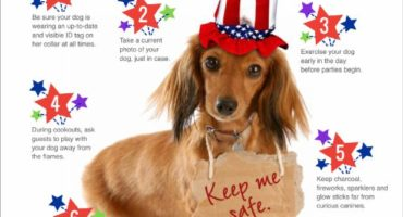 Keep Your Dog Safe This Independence Day!