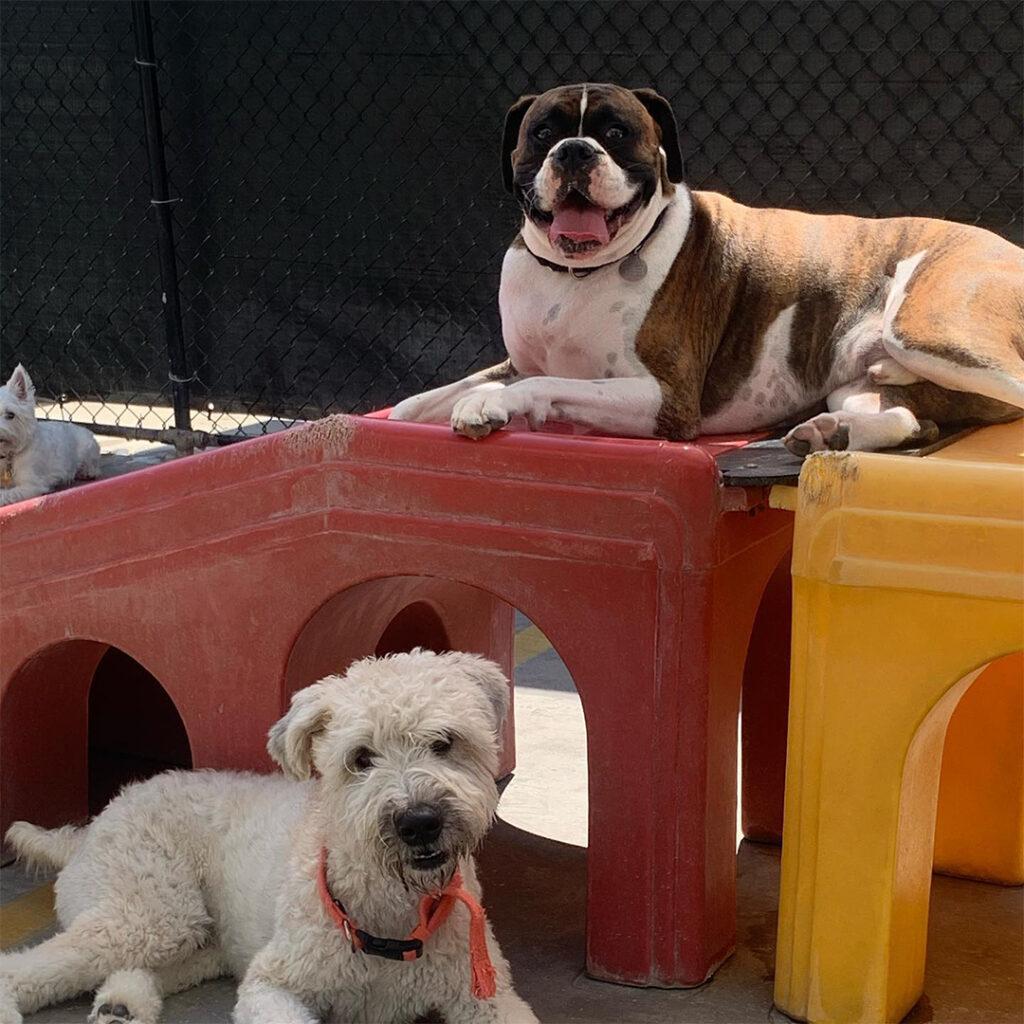 doggin around daycare